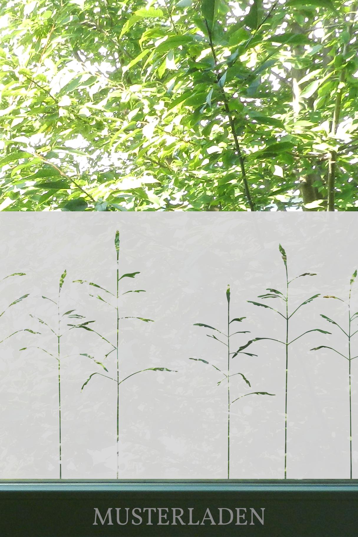 Fensterdeko und Sichtschutz Gräser - Musterladen